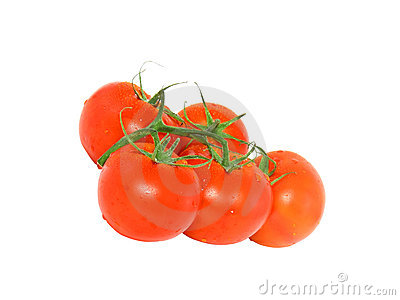Lush tomato with green branch. Isolated
