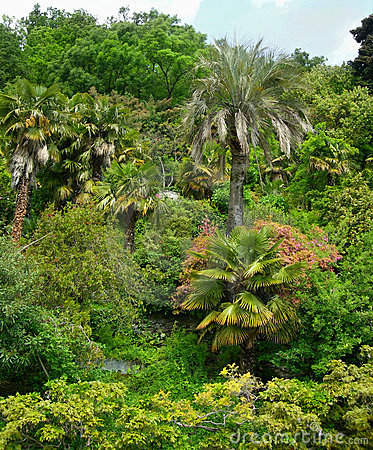 Lush tropical foliage