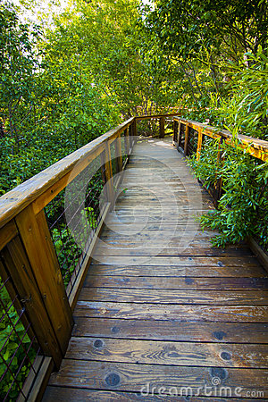 Lush Wooden Path