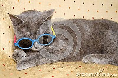 lustige katze mit sonnenbrille stockfoto bild 50450849. Black Bedroom Furniture Sets. Home Design Ideas