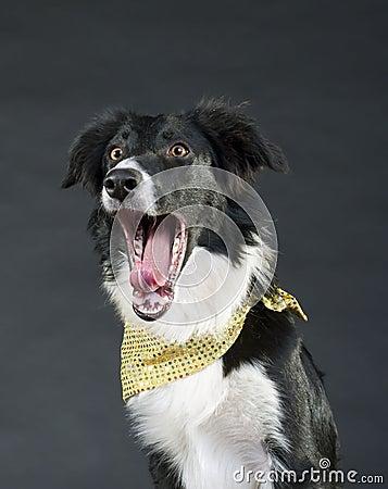 Lustiger schreiender Hund
