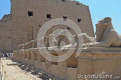 Luxor Sphinx Egypt
