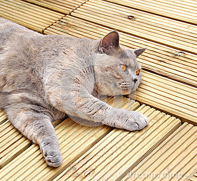 Luxury decking cat