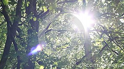 Luz do sol do brilho através do dossel video estoque