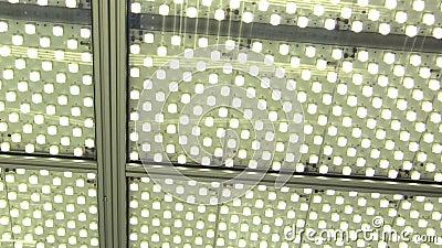 Luzes do laboratório na iluminação do laboratório da sala da ciência com bulbos ou as lâmpadas fluorescentes da lâmpada-relâmpago vídeos de arquivo