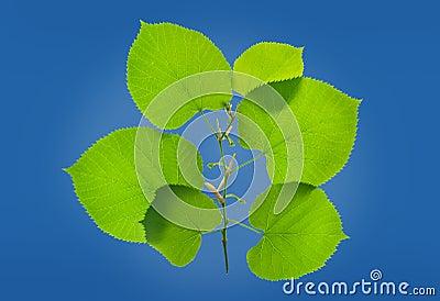 Lövrik grön växt