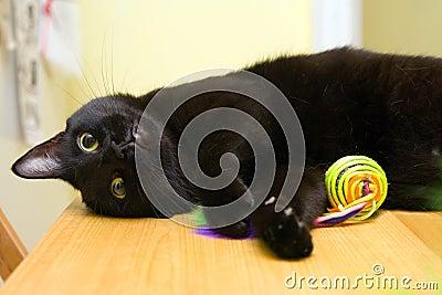 Lycklig katt