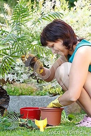 Lyckligt le mellersta arbeta i trädgården för ålderkvinna