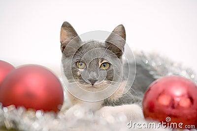Lying christmas kitten