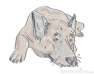 Lying hand drawn wolf-dog with sad eyes