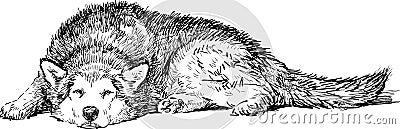 Lying husky