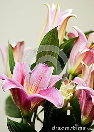 Lys, lily