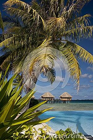 Lyxig semester - franska Polynesia