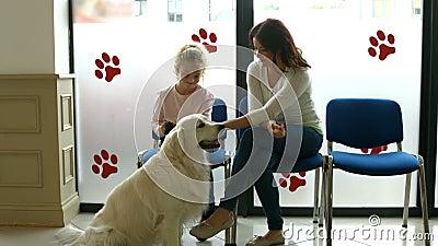 Mãe e filha com o cão na sala de espera do veterinário vídeos de arquivo