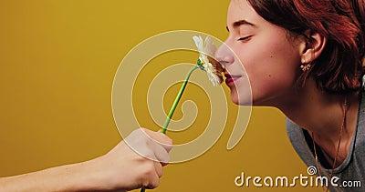 Męska ręka trzyma kwiatu w centrum rama Dziewczyna obwąchuje kwiatu i akceptuje prezent na kolorze żółtym i zdjęcie wideo
