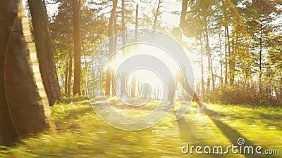 Mädchen geht, im Holz zu rütteln stock video
