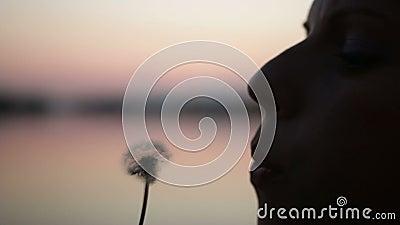 Mädchenschlag auf Löwenzahn im Sonnenuntergang stock footage