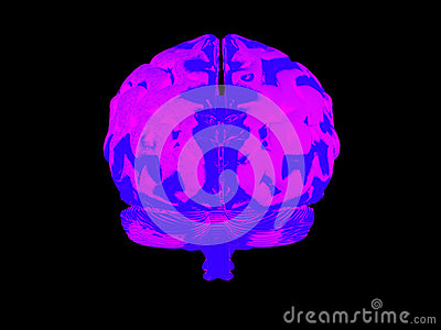 Mänsklig hjärna 3d