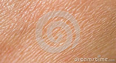 Mänsklig hud