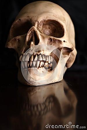Mänsklig skalle