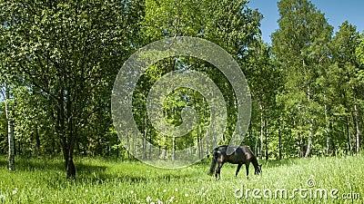 Mörk häst på ängen