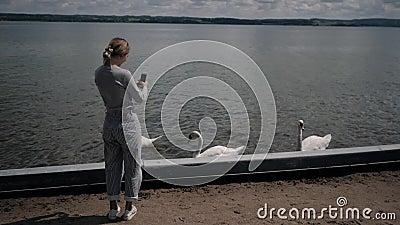 Młoda kobieta latem bierze łabędzie na jeziorze zbiory