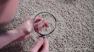Młoda kobieta powiększająca szkło znajduje i bada włosy zwierząt na dywanie blisko zdjęcie wideo