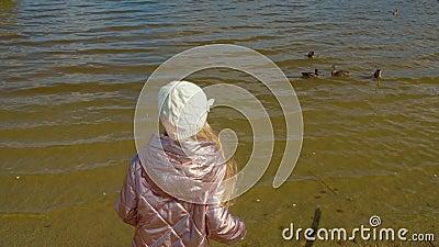 Młodej dziewczyny karmienia kaczki na jeziorze w jesień parku brać na swoje barki widok zbiory