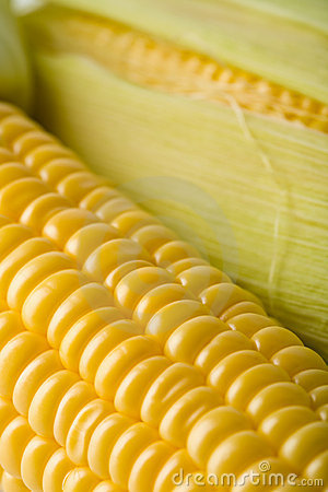 Maïs frais de grains macro
