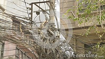 Małpa na elektryczność kablu w mieście kathmandu Nepal zbiory