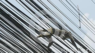 Małpa na elektryczność kablu w mieście kathmandu Nepal zbiory wideo