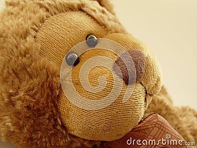 Mały teddy bear