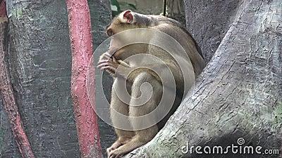 Macaco que senta-se em uma filial de árvore filme