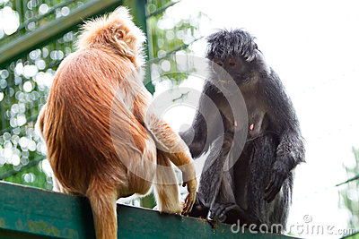 Macacos no jardim zoológico
