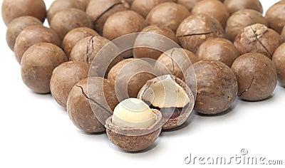 Macadamia fruit