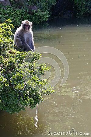 Macaque in a bush