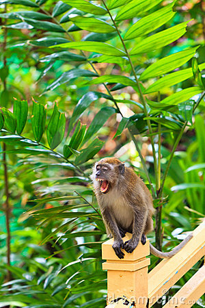 Macaque Monkey Hanging On A Fence Stock Images - Image: 16644244