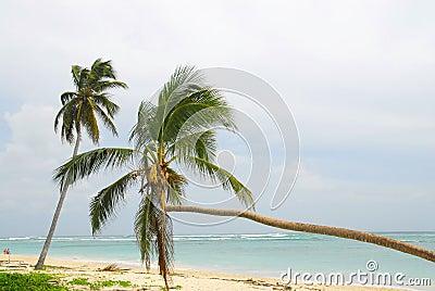 Macau Beach - R. Dominicana