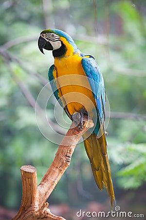 Free Macaw Stock Photos - 57382913