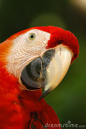 Free Macaw Royalty Free Stock Images - 5742149