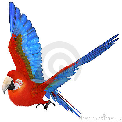 Free Macaw Stock Images - 8815844