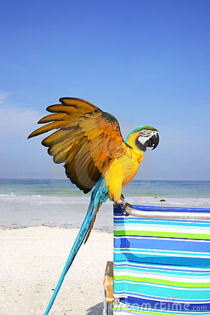 Free Macaw Beach Stock Photography - 294222