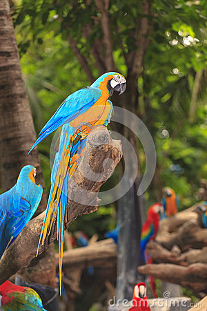 Macaw Birds Royalty Free Stock Images - Image: 33167359 Group Of Colorful Birds