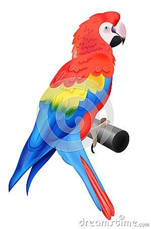 Macaw colorido del loro aislado en el fondo blanco