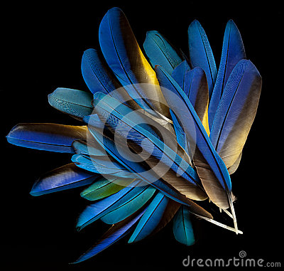 Free Macaw Feathers Stock Images - 27611474