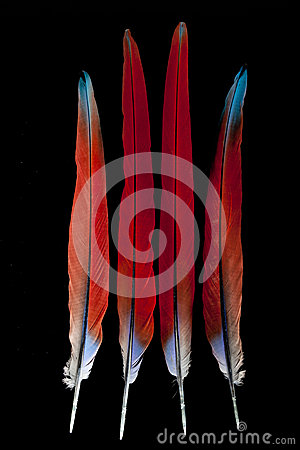 Free Macaw Feathers Stock Photography - 27828712