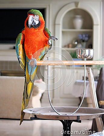 Macaw indoors
