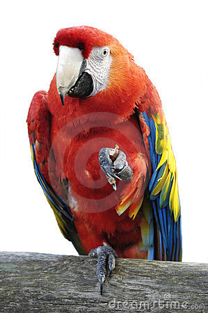 Free Macaw Isolated Stock Photo - 638610