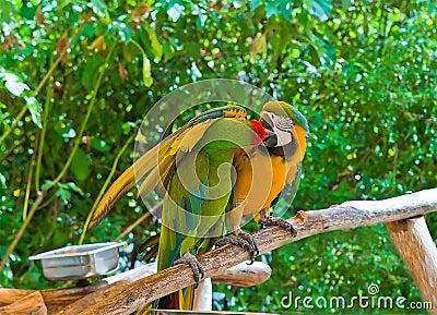 Macaw Romance