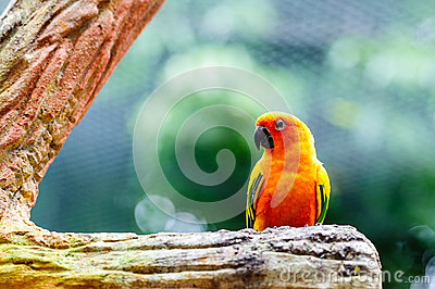 Macaw on the tree